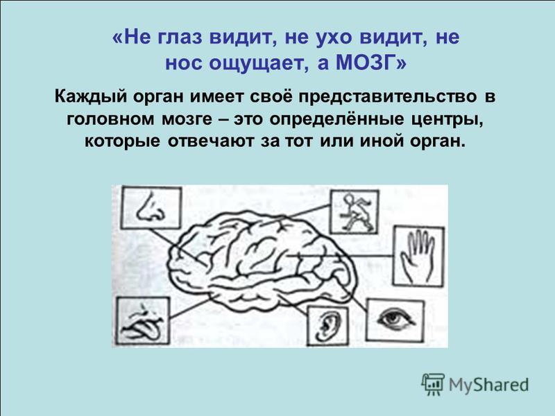 «Не глаз видит, не ухо видит, не нос ощущает, а МОЗГ» Каждый орган имеет своё представительство в головном мозге – это определённые центры, которые отвечают за тот или иной орган.