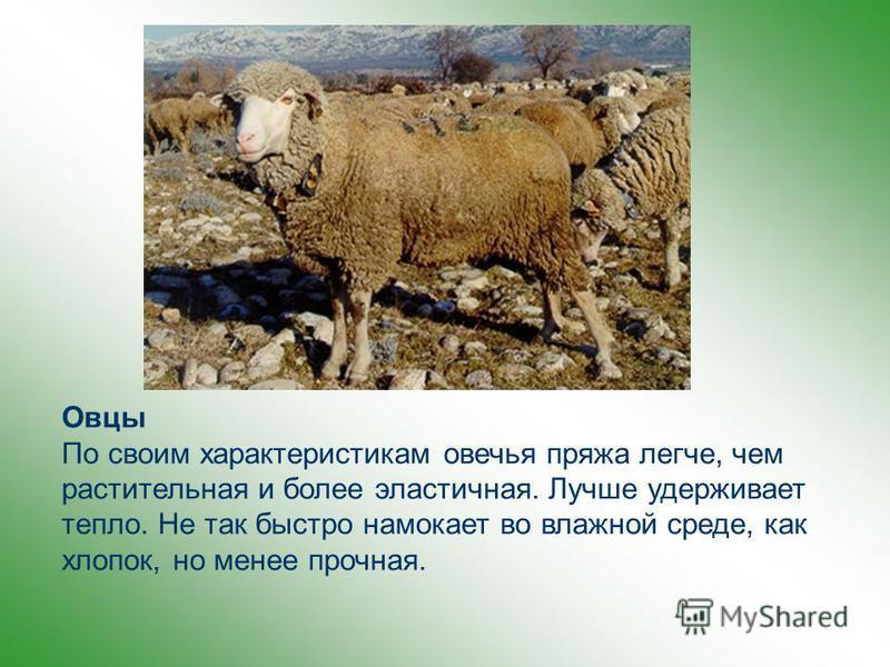 Шерстью называют волосяной покров различных животных: овец, коз, верблюдов и др. Шерсть получают в результате стрижки или вычесывания различных животных Наиболее широкое применение в производстве текстильных материалов имеет шерсть овец. Шерсть, снят