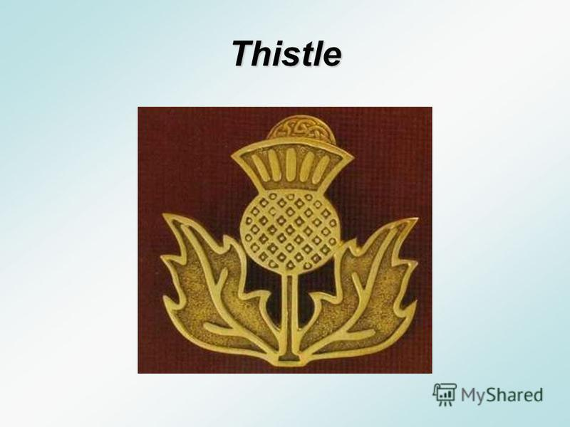 A. Thistle B. Daffodil C. Clover A. T histle B. D affodil C. C lover What is the national flower of Scotland?