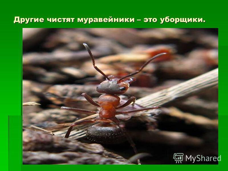 Другие чистят муравейники – это уборщики. Другие чистят муравейники – это уборщики. Другие чистят муравейники – это уборщики.