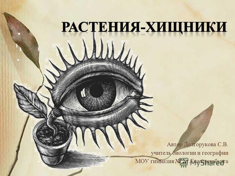 Автор Долгорукова С.В. учитель биологии и географии МОУ гимназия 2 г.Екатеринбурга