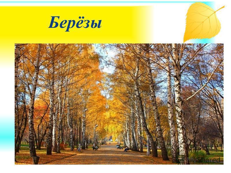 Падают с ветки жёлтые монетки... Под ногами целый клад! Это осень золотая Дарит листья не считая, Золотые дарит листья Вам, и нам, И всем подряд !