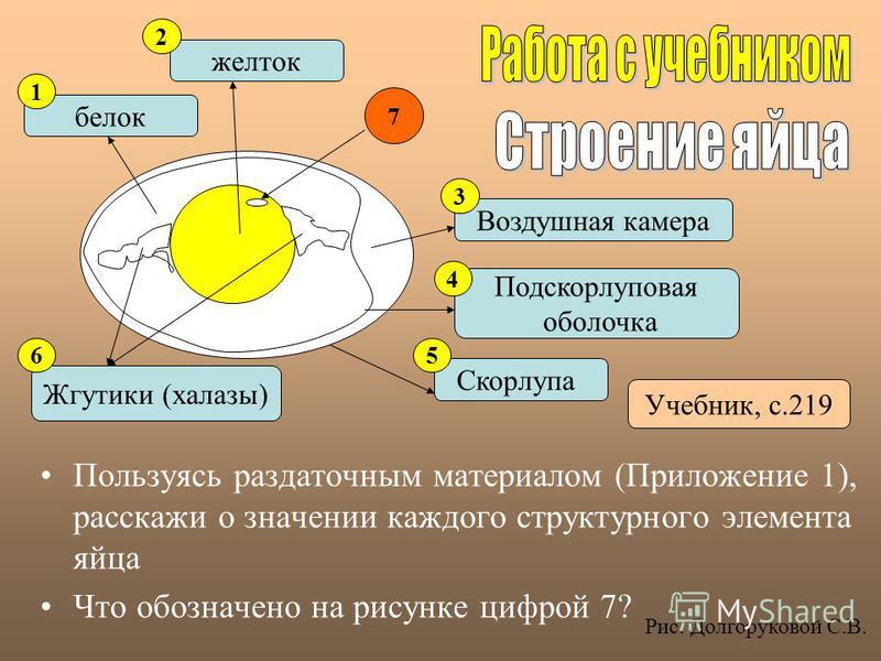 Пользуясь раздаточным материалом (Приложение 1), расскажи о значении каждого структурного элемента яйца Что обозначено на рисунке цифрой 7? белок желток Жгутики (халазы) Подскорлуповая оболочка Воздушная камера Скорлупа 1 2 3 4 56 Учебник, с.219 7 Ри
