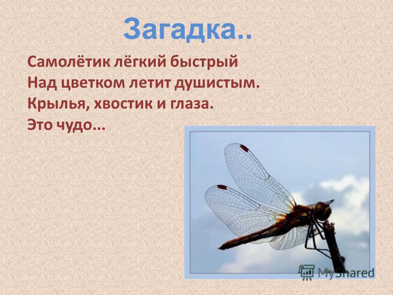 Самолётик лёгкий быстрый Над цветком летит душистым. Крылья, хвостик и глаза. Это чудо... Загадка..