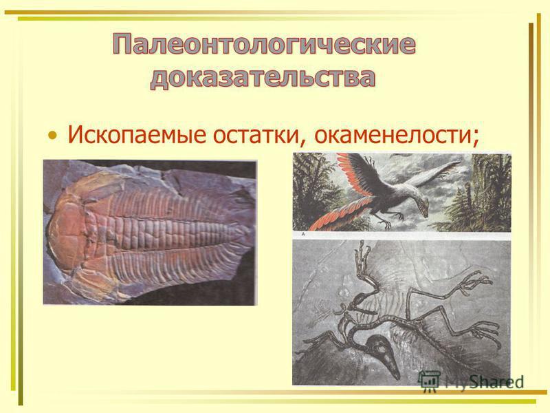 Ископаемые остатки, окаменелости;