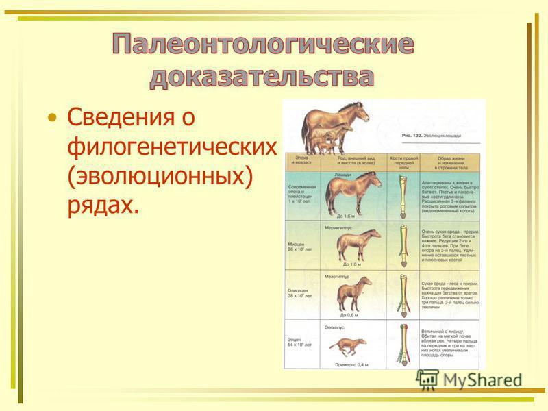 Сведения о филогенетических (эволюционных) рядах.