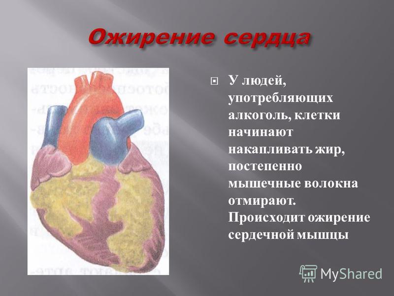 Сердце человека тренированного : сосуды крепкие, мышцы эластичные