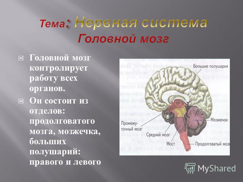 1. Снижение физической активности (гиподинамия) 2. Избыточный вес; 3. Курение; 4. Алкоголь; 5. Чрезмерные психические нагрузки;