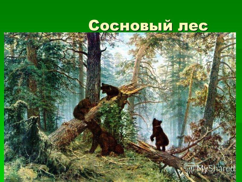 Сосновый лес Сосновый лес