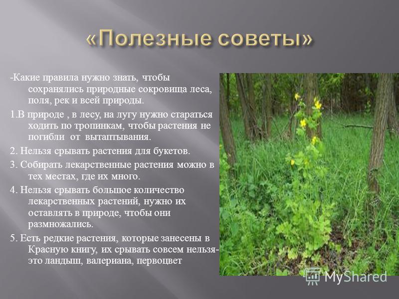 - Какие правила нужно знать, чтобы сохранялись природные сокровища леса, поля, рек и всей природы. 1. В природе, в лесу, на лугу нужно стараться ходить по тропинкам, чтобы растения не погибли от вытаптывания. 2. Нельзя срывать растения для букетов. 3