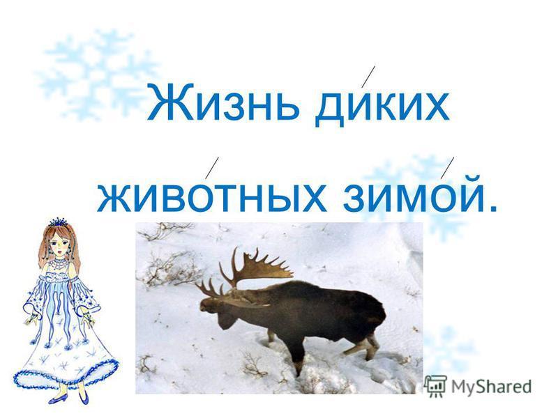 Жизнь диких животных зимой.