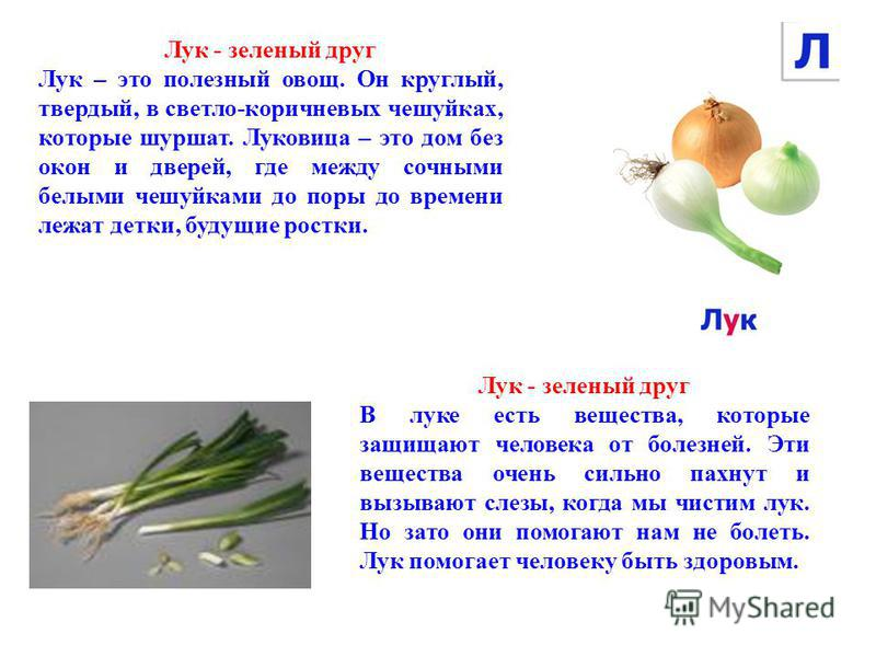 Лук - зеленый друг Лук – это полезный овощ. Он круглый, твердый, в светло-коричневых чешуйках, которые шуршат. Луковица – это дом без окон и дверей, где между сочными белыми чешуйками до поры до времени лежат детки, будущие ростки. Лук - зеленый друг