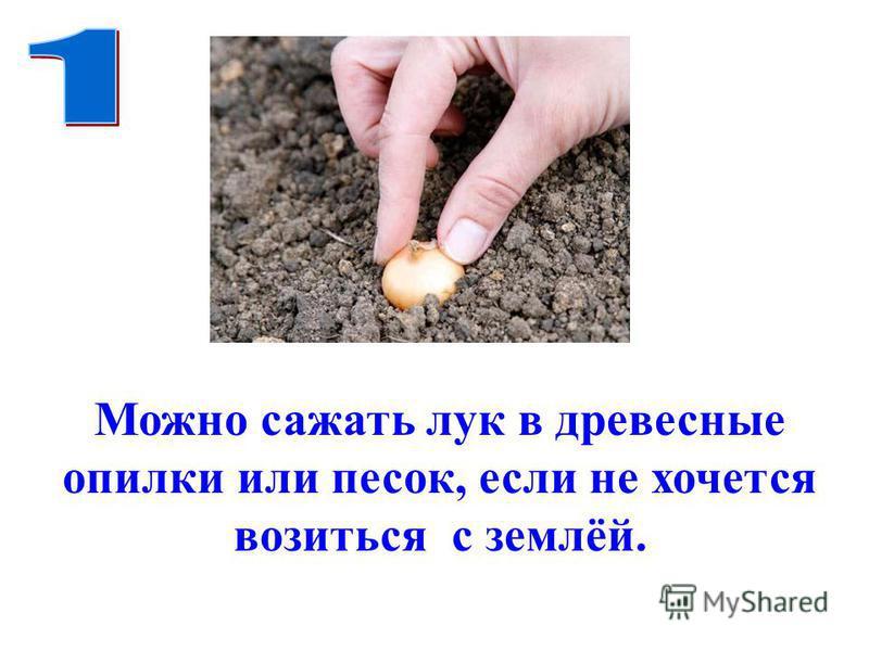 Можно сажать лук в древесные опилки или песок, если не хочется возиться с землёй.