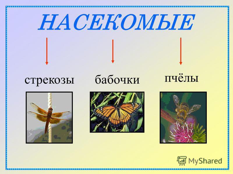 НАСЕКОМЫЕ бабочки стрекозы пчёлы