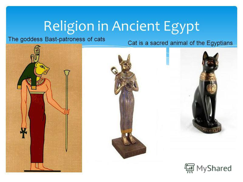 Religion in Ancient Egypt Cat is a sacred animal of the Egyptians The goddess Bast-patroness of cats