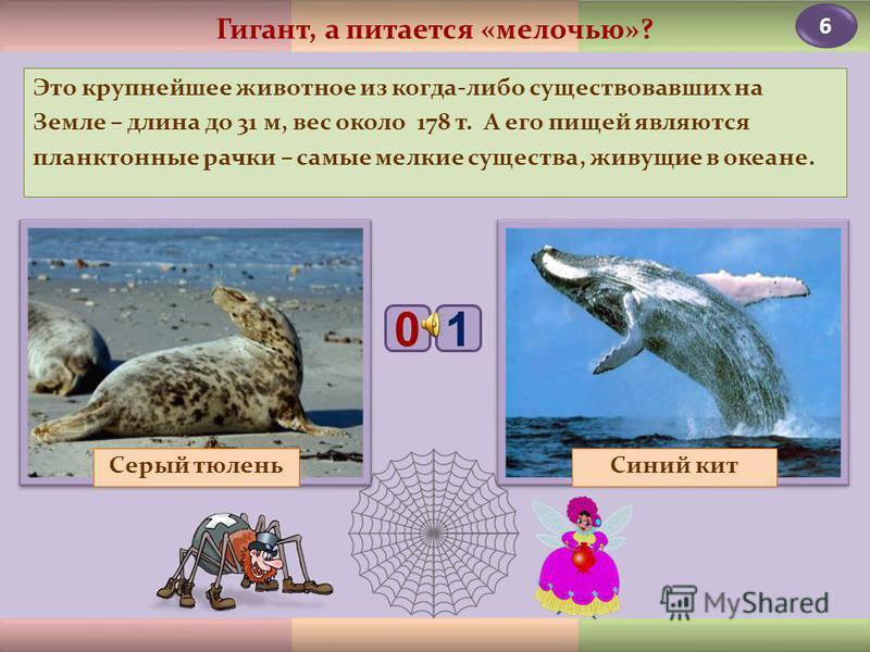 4 Местные жители Алтая утверждают, что он сочетает в себе качества различных домашних животных: как и корова, даёт молоко; с него стригут шерсть, как с овцы; хвост у него лошадиный, а хрюкает, как свинья. Як «Комплексное» животное Кабарга 01