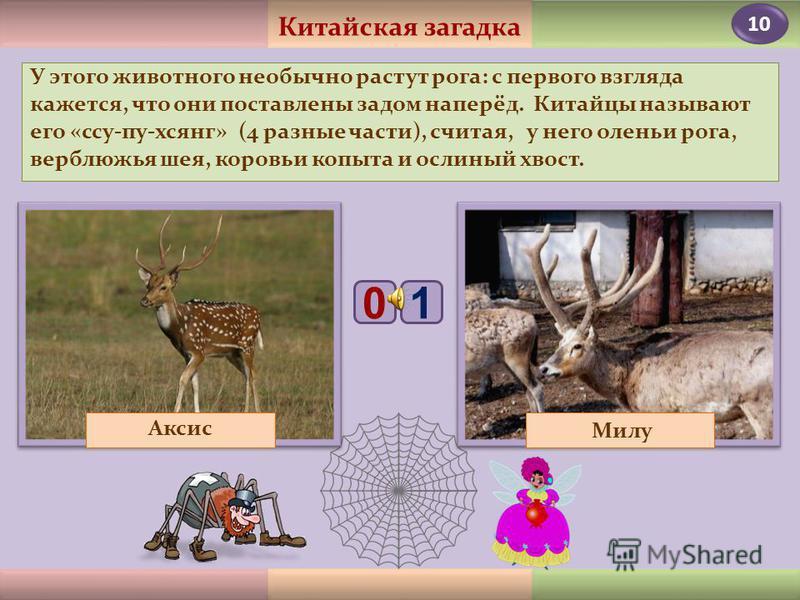 8 Питается это животное в основном травой, которую «скашивает» с помощью своей широкой плоской верхней губы. У него нет резцов, поэтому слишком короткую траву он с корнем выкапывает своим рогом. Кто «косит» верхней губой? Лось Носорог 10