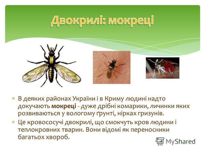 В деяких районах України і в Криму людині надто докучають мокреці - дуже дрібні комарики, личинки яких розвиваються у вологому ґрунті, нірках гризунів. Це кровососучі двокрилі, що смокчуть кров людини і теплокровних тварин. Вони відомі як переносники