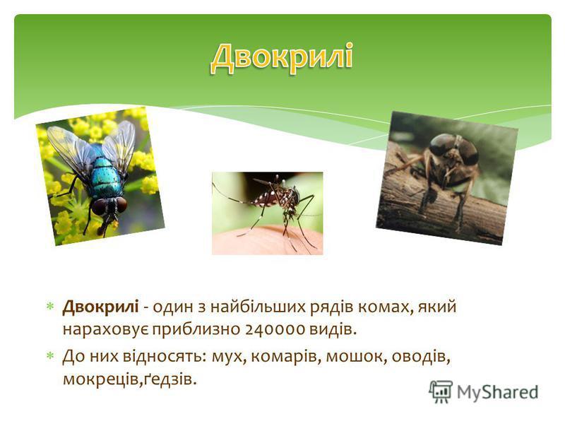 Двокрилі - один з найбільших рядів комах, який нараховує приблизно 240000 видів. До них відносять: мух, комарів, мошок, оводів, мокреців,ґедзів.
