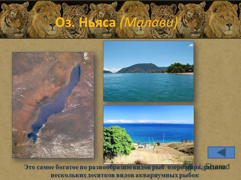 Оз. Ньяса (Малави) Это самое богатое по разнообразию видов рыб озеро мира, родина нескольких десятков видов аквариумных рыбок