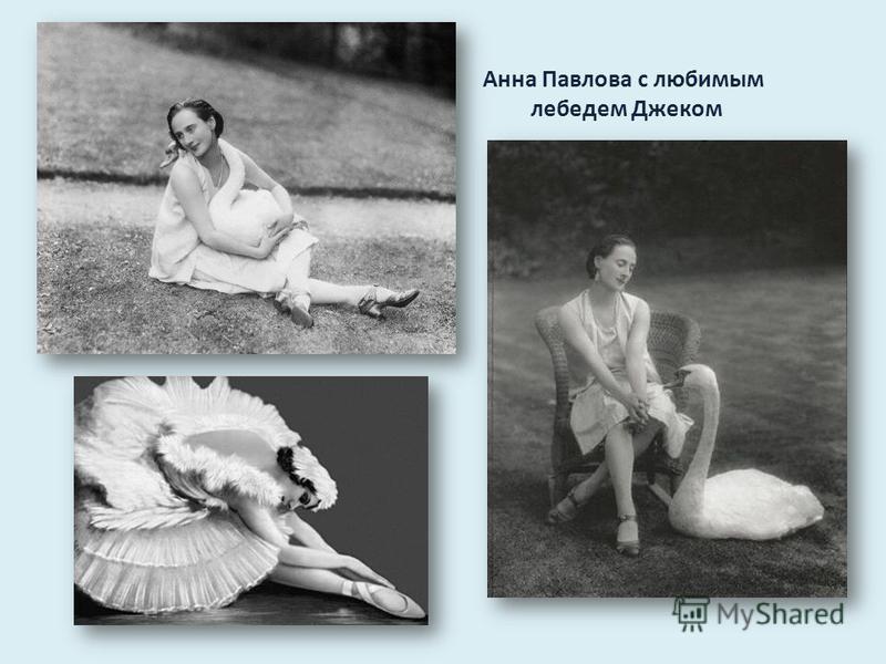Анна Павлова с любимым лебедем Джеком
