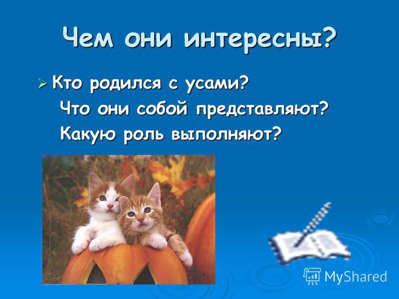 Чем они интересны? Кто родился с усами? Что они собой представляют? Какую роль выполняют?