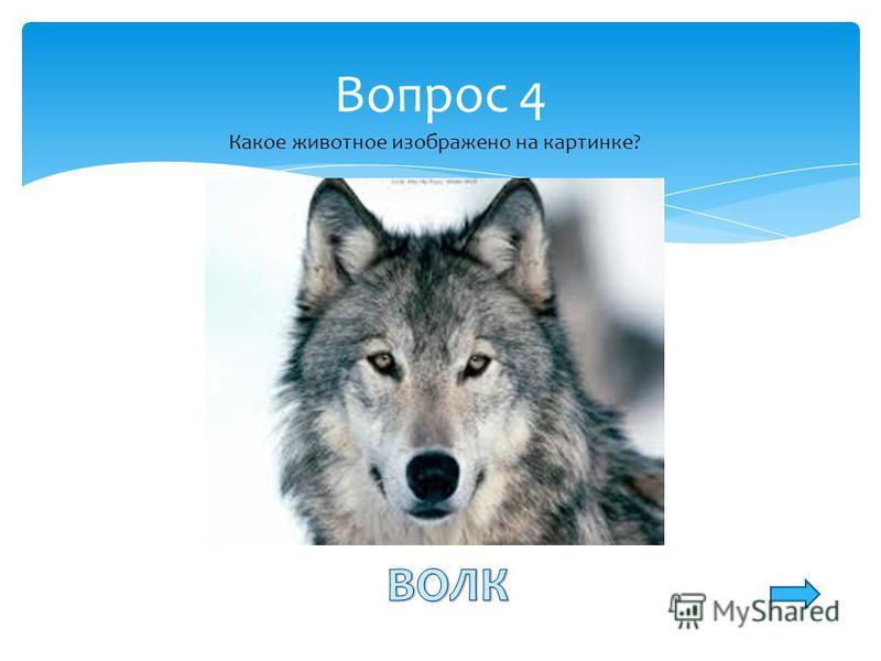 Вопрос 4 Какое животное изображено на картинке?