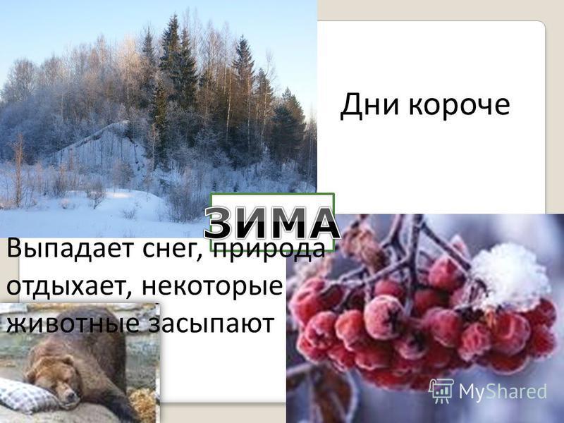 Дни короче Выпадает снег, природа отдыхает, некоторые животные засыпают