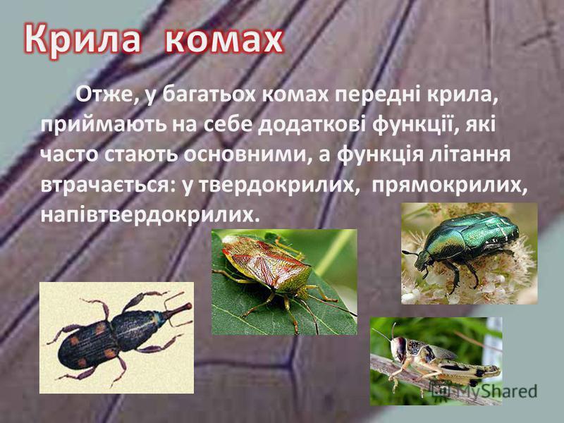 Отже, у багатьох комах передні крила, приймають на себе додаткові функції, які часто стають основними, а функція літання втрачається: у твердокрилих, прямокрилих, напівтвердокрилих.