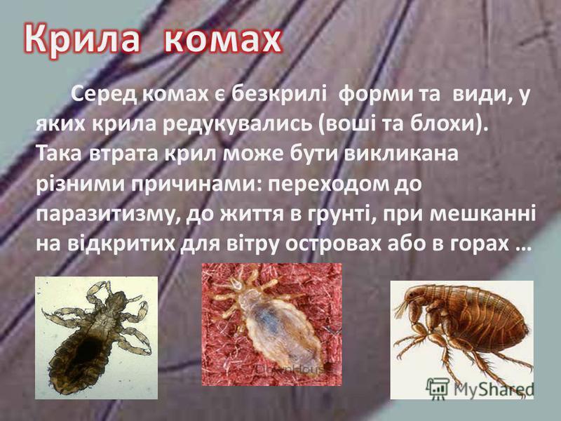 Серед комах є безкрилі форми та види, у яких крила редукувались (воші та блохи). Така втрата крил може бути викликана різними причинами: переходом до паразитизму, до життя в грунті, при мешканні на відкритих для вітру островах або в горах …