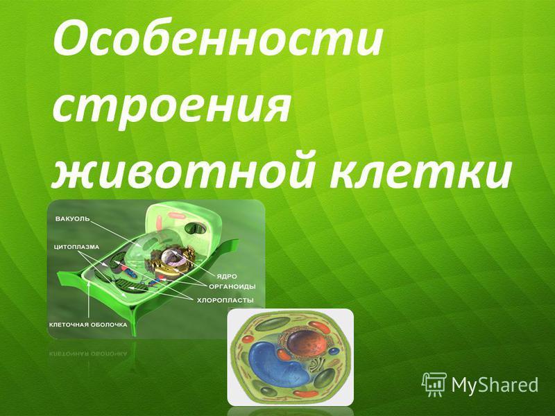 Особенности строения животной клетки