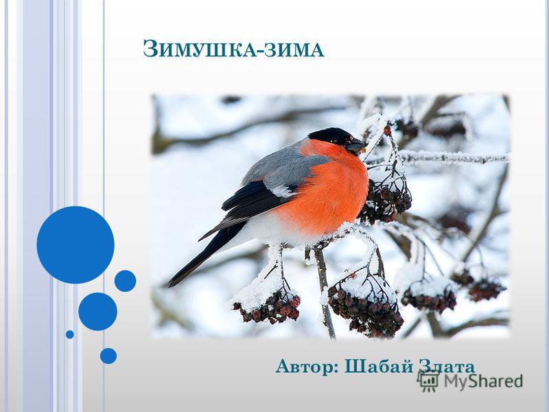 З ИМУШКА - ЗИМА Автор: Шабай Злата