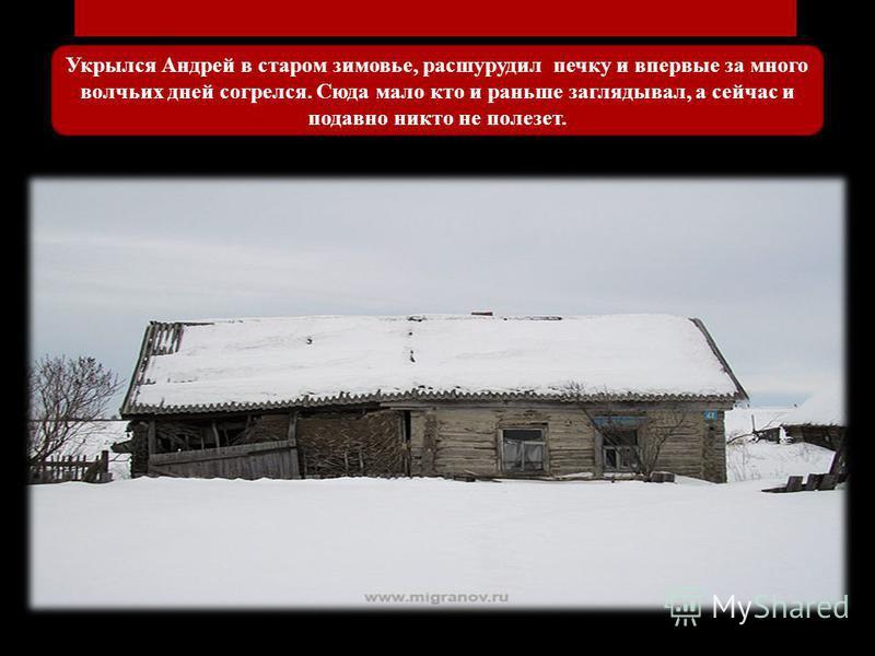 Укрылся Андрей в старом зимовье, расшурудил печку и впервые за много волчьих дней согрелся. Сюда мало кто и раньше заглядывал, а сейчас и подавно никто не полезет.