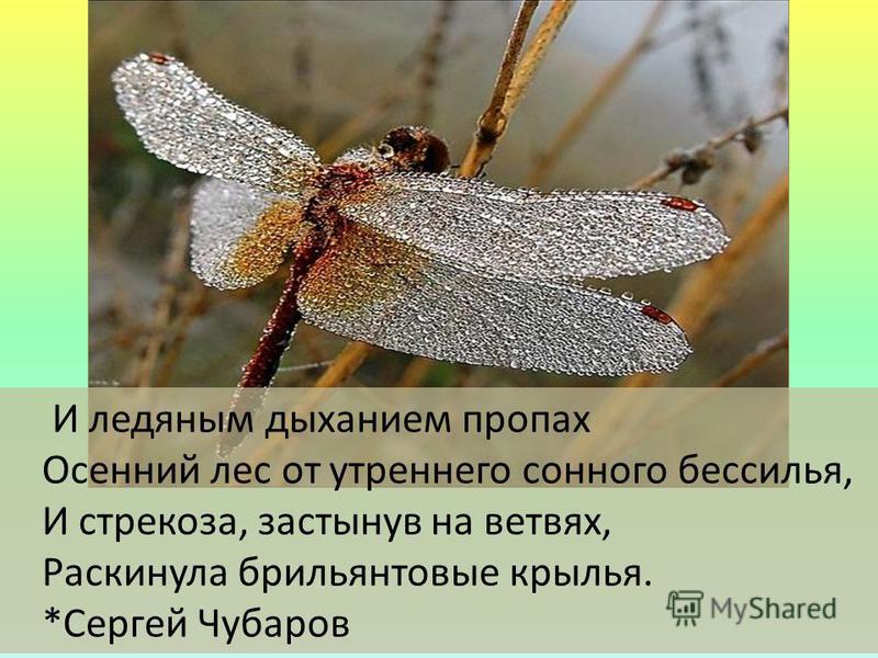 И ледяным дыханием пропах Осенний лес от утреннего сонного бессилья, И стрекоза, застынув на ветвях, Раскинула брильянтовые крылья. *Сергей Чубаров