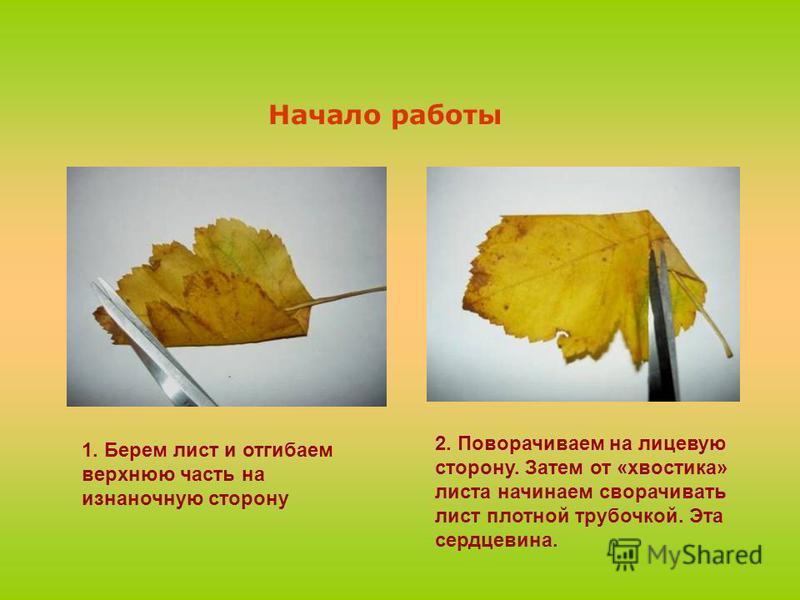 1. Берем лист и отгибаем верхнюю часть на изнаночную сторону Начало работы 2. Поворачиваем на лицевую сторону. Затем от «хвостика» листа начинаем сворачивать лист плотной трубочкой. Эта сердцевина.