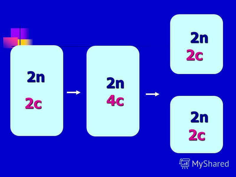 2n 2n 2c 2c 2n 2n 2c 2c 2n 2n 2n 2n2c 2n 2n 2n 2n 2c 2c 2n 2n2n 2n 4c 4c 4c 4c