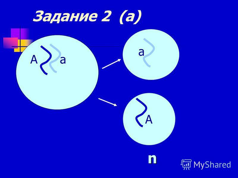 Задание 2 (а) А а а А n