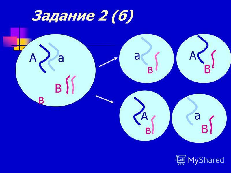 Задание 2 (б) А а В в а в А в А В а В