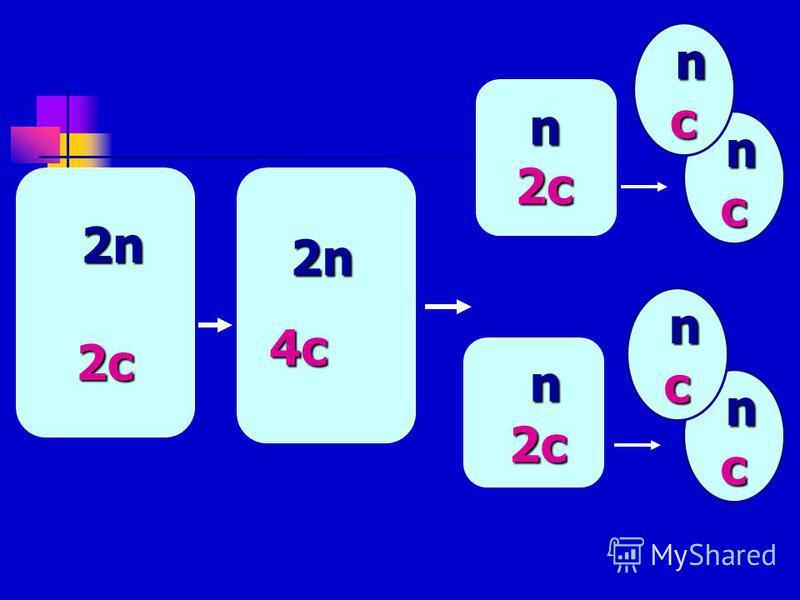 2n 2n2c2c2n 2n2c2c 2n 2n 2n 2n 4c4c4c4c n2c n2c n nn nc n nn nc n nn nc n nn nc