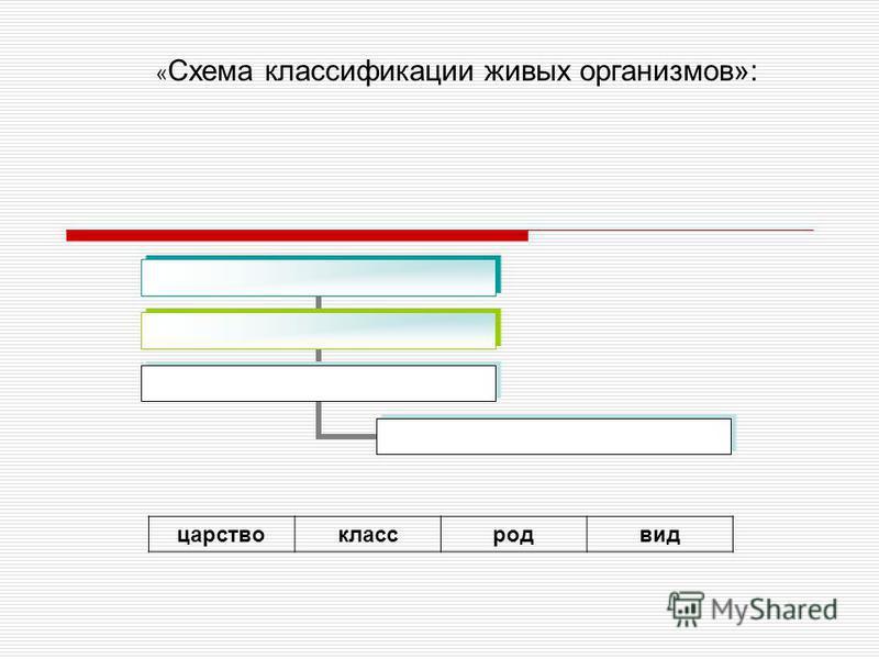 « Схема классификации живых организмов»: царствоклассродвид