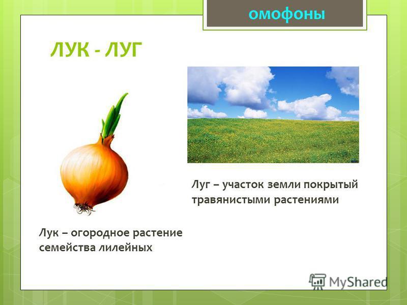 ЛУК - ЛУГ Лук – огородное растение семейства лилейных омофоны Луг – участок земли покрытый травянистыми растениями