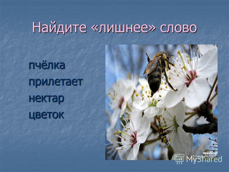 Найдите «лишнее» слово пчёлка пчёлка прилетает прилетает нектар нектар цветок цветок