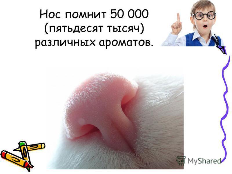 Нос помнит 50 000 (пятьдесят тысяч) различных ароматов.