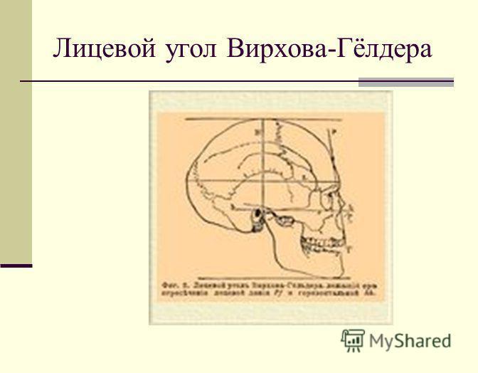 Лицевой угол Вирхова-Гёлдера