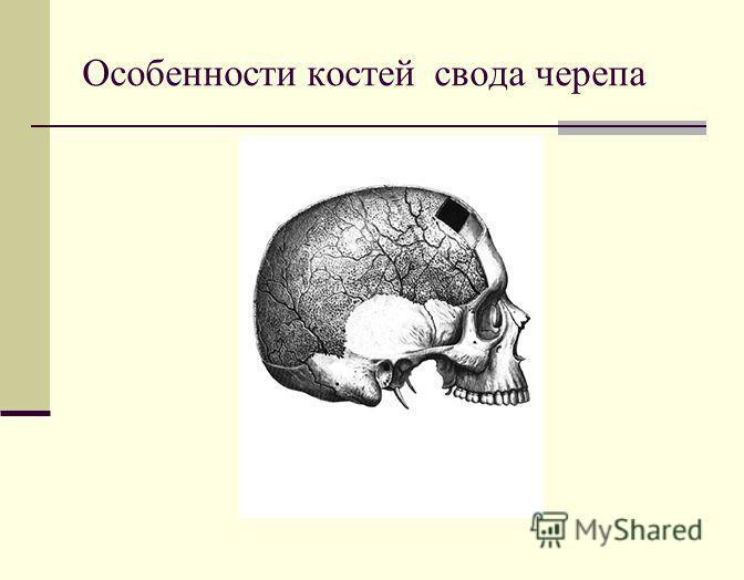 Особенности костей свода черепа