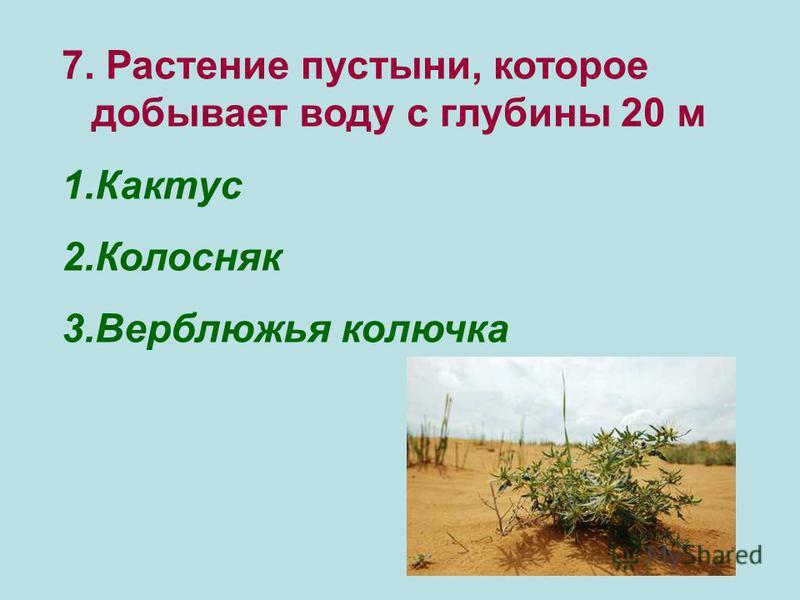 7. Растение пустыни, которое добывает воду с глубины 20 м 1. Кактус 2. Колосняк 3. Верблюжья колючка