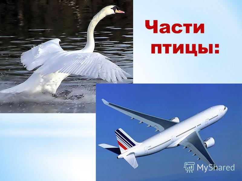 Части птицы: 1. Крылья 2. Туловище 3. Шея 4. Хвост 5. Лапки 6.Голова