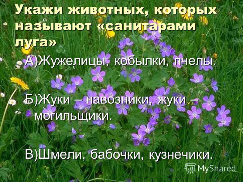 Укажи животных, которых называют «санитарами луга» А)Жужелицы, кобылки, пчелы. Б)Жуки – навозники, жуки – могильщики. В)Шмели, бабочки, кузнечики.