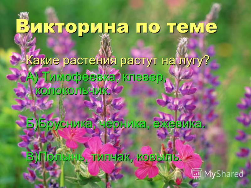 Викторина по теме Какие растения растут на лугу? А) Тимофеевка, клевер, колокольчик. Б)Брусника, черника, ежевика. В)Полынь, типчак, ковыль.