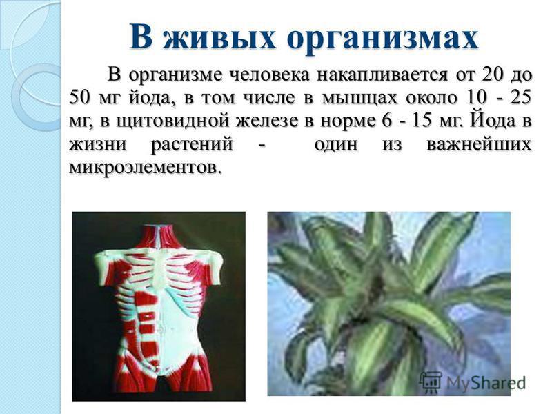 В живых организмах В организме человека накапливается от 20 до 50 мг йода, в том числе в мышцах около 10 - 25 мг, в щитовидной железе в норме 6 - 15 мг. Йода в жизни растений - один из важнейших микроэлементов. В организме человека накапливается от 2